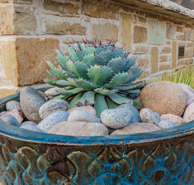 Frisco, Texas Landscape Designer